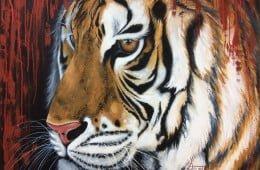 Focus tigre